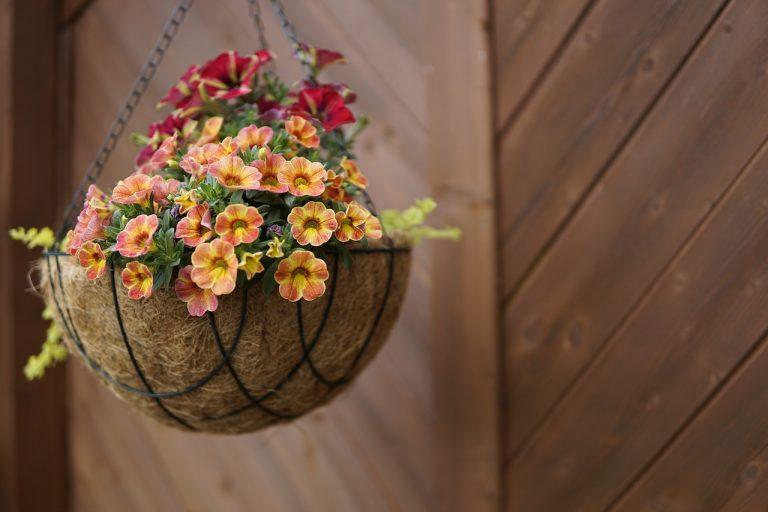 саксии-за-цветя